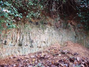 Picture of Whitlingham Chalk Pit