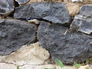 Picture of Wickhampton basalt
